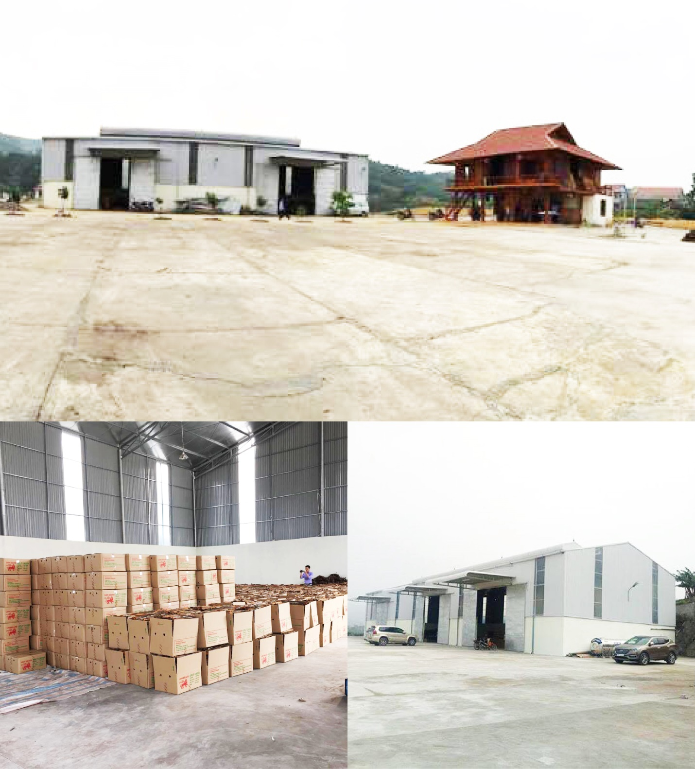 VISIMEX OPENED THE FOURTH FACTORY IN THE BIGGEST GROWING REGION CINNAMON VIETNAM